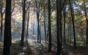 Las na Buczynie